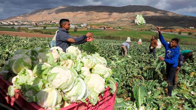 Des fermiers palestiniens regagnent leurs terres après plus de 40 ans ! (Vidéo)