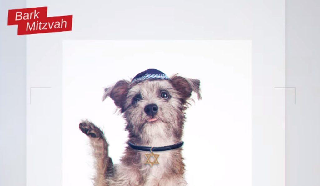 Israël : les chiens entrent en campagne électorale